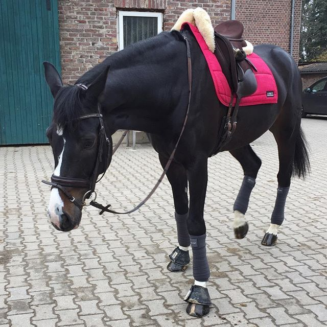 Instagram media by maria_gress - Some rosé vibes in our grey world 🎀  #bestfriend  #outfit #dressurpferd #dressagehorse #dressur #dressage #paard #pferd #paardrijden #riderslife #reiten #reitsport #hest #horse #horses #horsestagram #horsesofinstagram #horses_of_instagram #equi  #equestrian #конныйспорт #лошадь #выездка #friend  #bestfriend #besthorse #love #lovemywork