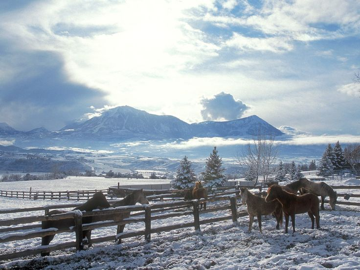 Country Background Images | Country Winter, Arabians.jpg