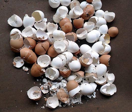 As cascas de ovos possuem nutrientes essenciais às nossas plantas. Elas são ricas em cálcio, potássio e magnésio. As galinhas poedeiras comerciais são alim