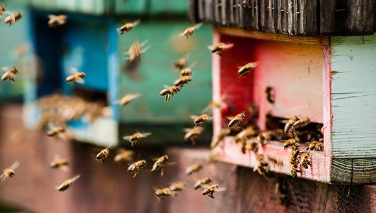 Where is the best place to put a beehive? -Here's what you need to know about sunlight, apiary air traffic control, and skunks. -By Networx.com on Jan 21, 2014