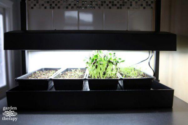 Countertop Gardening For Every Kitchen Countertops Indoor