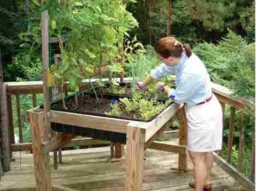 Classroom Garden Ideas ~ Another waist high planting box using cement mixing tubs