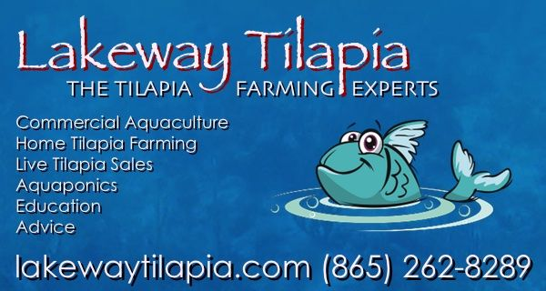 Use our live tilapia selection guide to choose the right tilapia species for your tilapia farming operation or aquaponics system. We sell tilapia fingerlings.