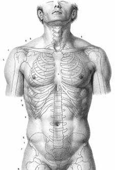Best 25 human anatomy for artists ideas on pinterest anatomy drawing anatomy for artists ultimate free guide fandeluxe Gallery
