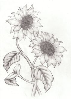 how to draw sunflowers - Google Search