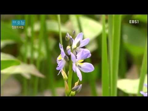 다큐 오늘 - 잡초의 비밀 - YouTube