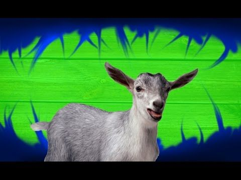 Cartoon Goat - Green Screen