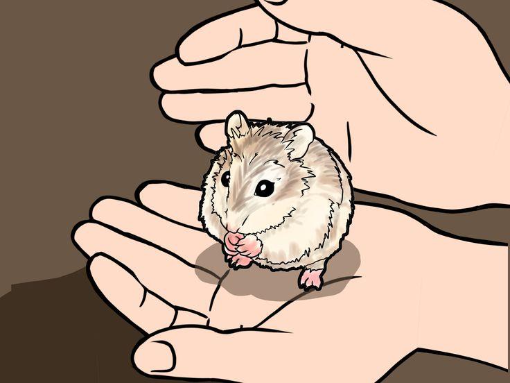 How+to+Tame+a+Roborovski+Hamster+--+via+wikiHow.com