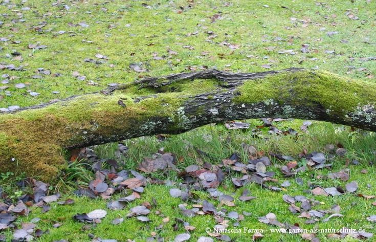 Totholz Garten Als Naturschutz Outdoor Bird Bath Outdoor Decor