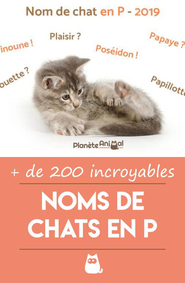 Nom De Chat En P Pour 2019 Plus De 200 Idees De Noms Noms De Chat Chat Femelle Prenom Chat Femelle