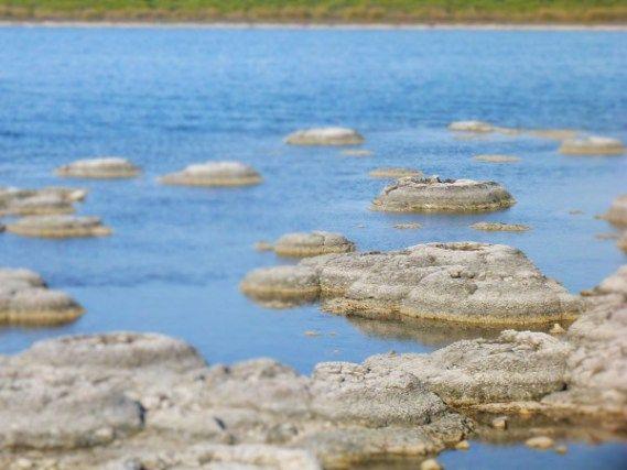 Strombolites and Thrombolites at Lake Thetis