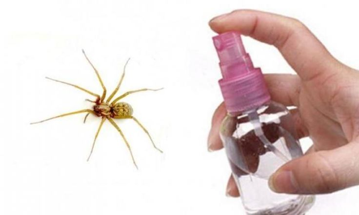 Comment garder les araignées loin de la maison!