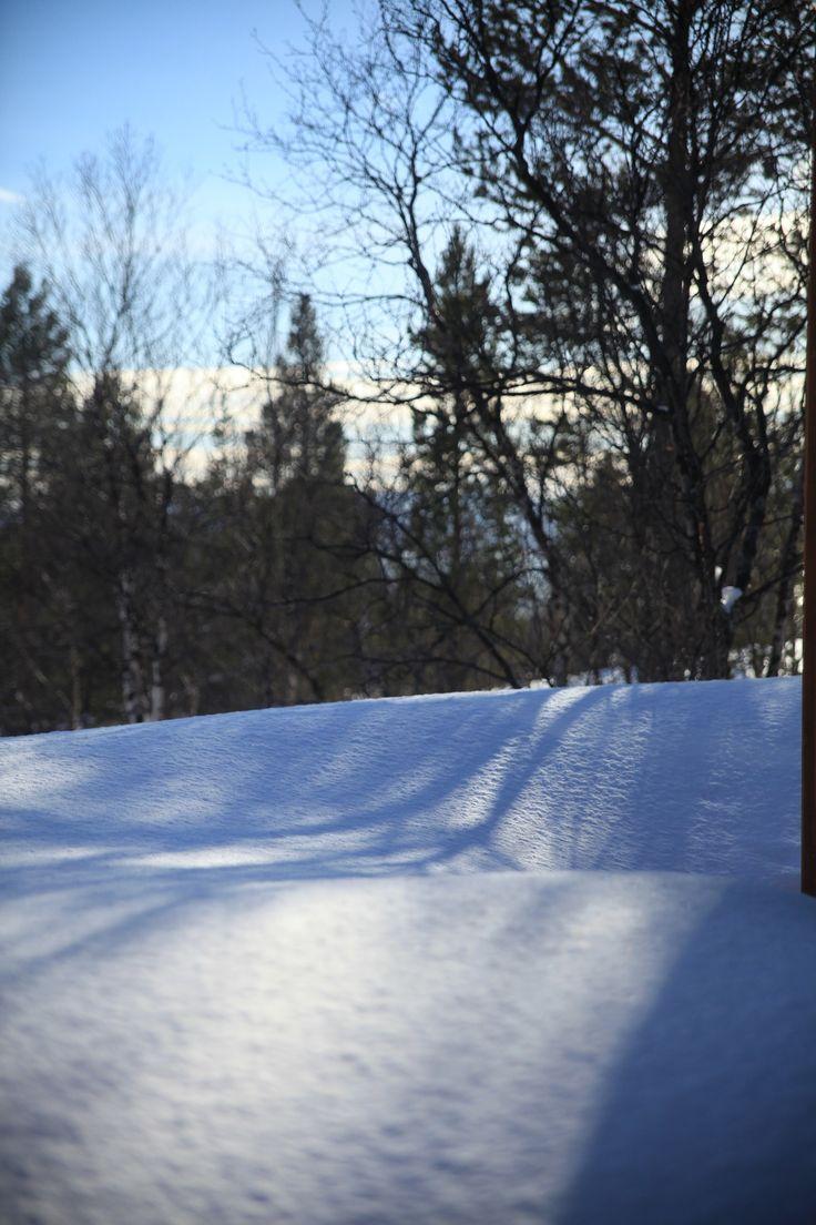 Winter in the garden Foto: Elisabeth Johnsen