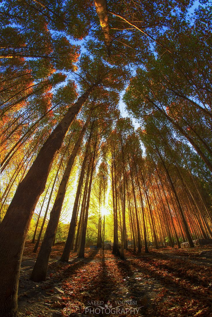 magical tree -