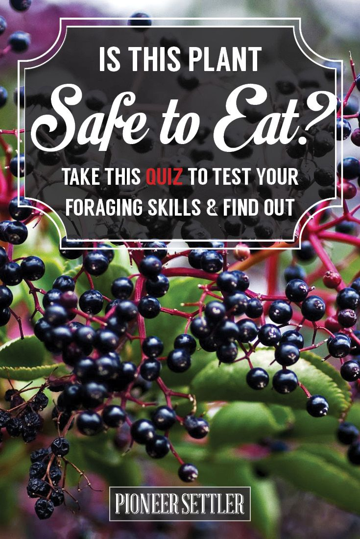 Check out Foraging for Edible Wild Plants - Could You Survive? [QUIZ]