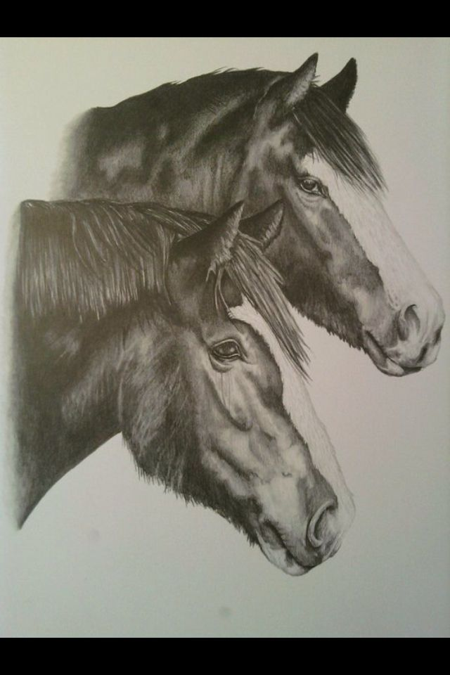 Sketch of my aunties horses