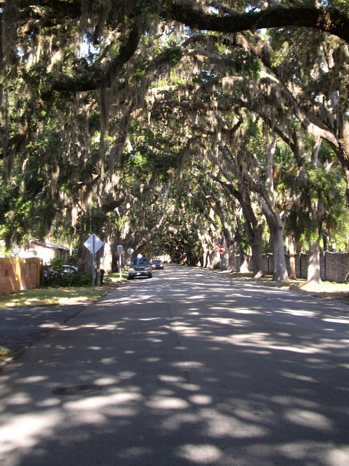 St. AUGUSTINE FL. Magnolia Ave.  One of the most photographed streets in the USA