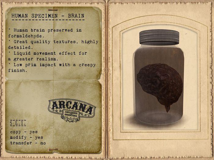 {A} Human Specimen - Brain
