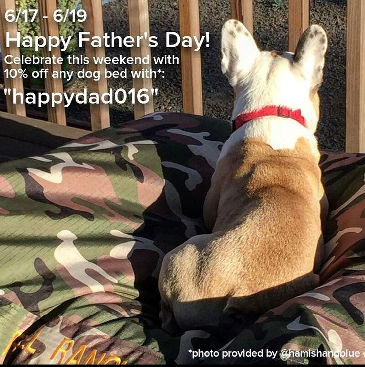 6 17 6 19 Celebrate Father S Day With 10 Off Any Dog Beds At Http K9ballistics Com Use Coupon Code Happydad016 Cann Dog Bed Giant Dog Beds Giant Dogs