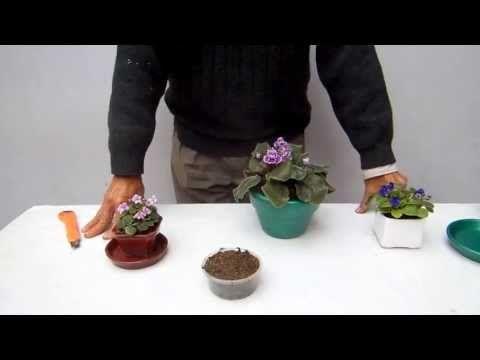 Tierra para violetas africanas 1 - YouTube