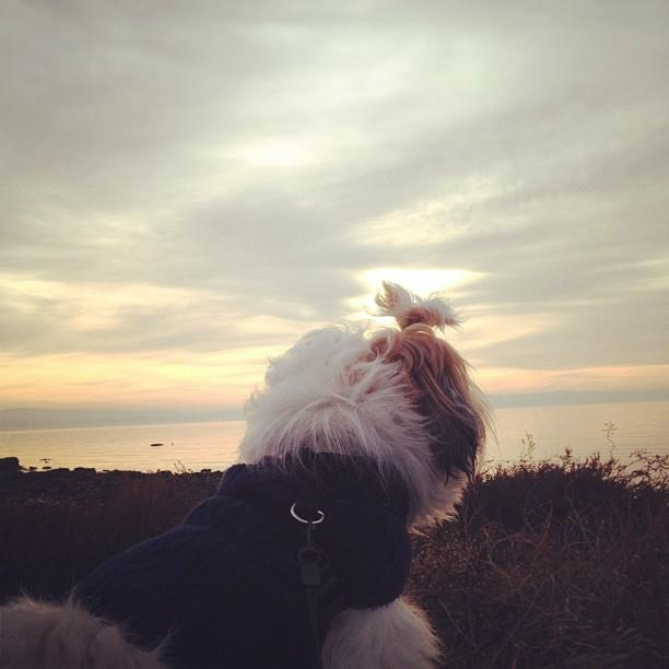 Staring at the sunset
