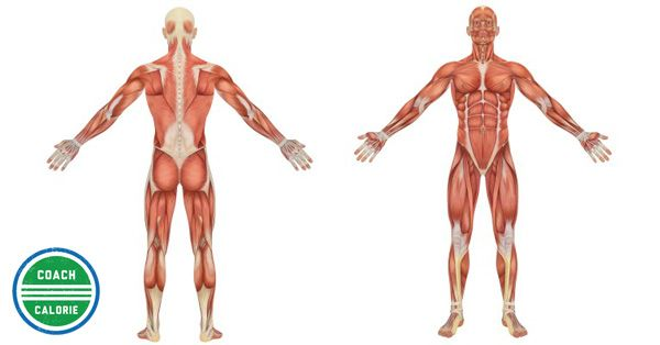 Different body compositions....what you did to your body to get it to this point and what you need to do to get lean and muscular.