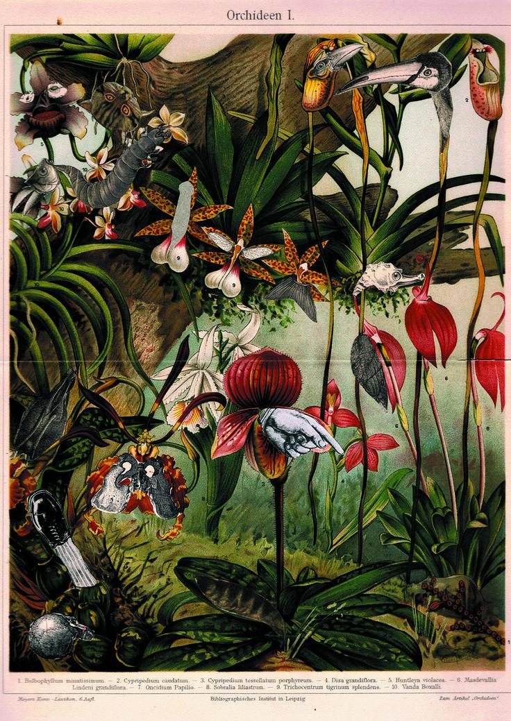 Plakat Orchidee /Jagoda Stączek #ladnerzeczy #targirzeczyladnych #ladnerzeczydziejasiewinternecie #polishdesign #design