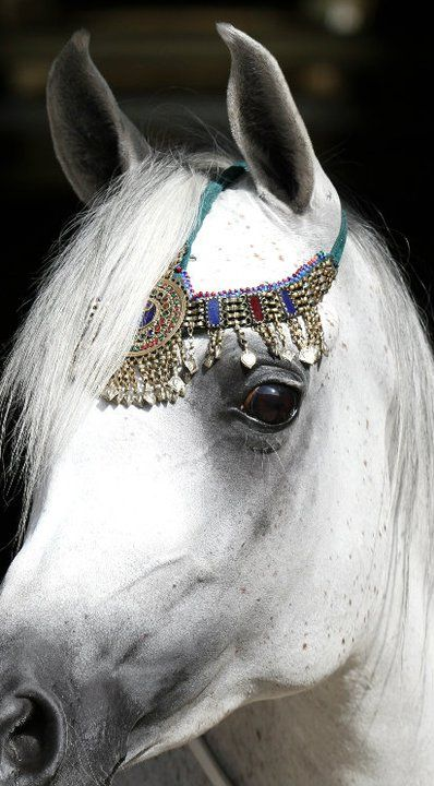 Beautiful Arabian Horse ~ Classic head, little dainty ears, oh, and I have several necklaces just like this gorgeous horse is wearing! <3