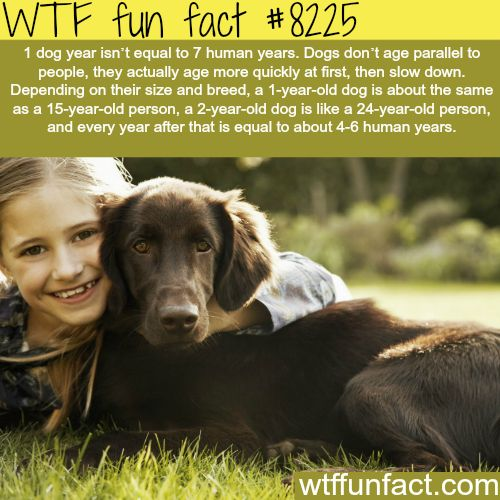 Also, dog years aren't a thing. It's just a way to let humans make sense of how old their dog is compared to them.