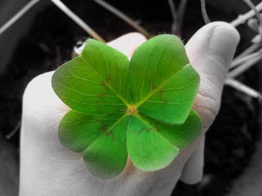 Para muchos, la suerte no existe, pero es cierto que todos la buscamos en nuestra vida cotidiana. Nunca todo está perdido, aún cuando creemos que ya nada puede estar peor. Conoce cuáles son los secretos de la suerte.