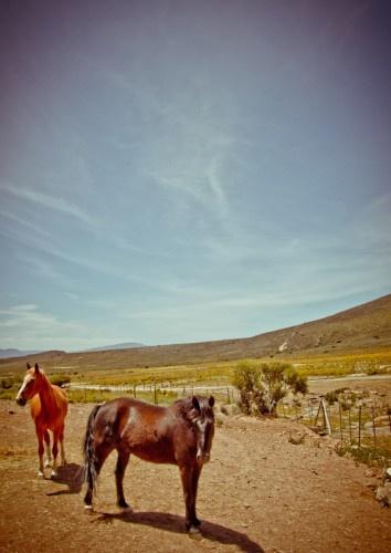 Awesome weekend break: Desert Wind in the Klein Karoo