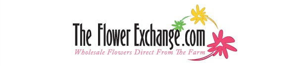 I love this website for bulk flower orders. For a wedding or event, save money by arranging your own flowers.