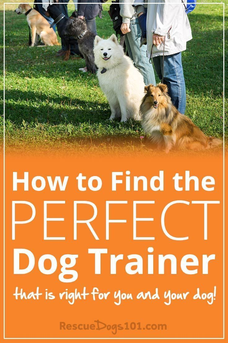 How To Find The Perfect Dog Trainer Dog Training The Perfect