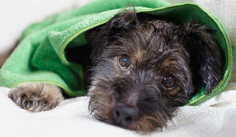 Ręczniki z mikrowłókna dla zwierząt, 2 sztuki #tchibo