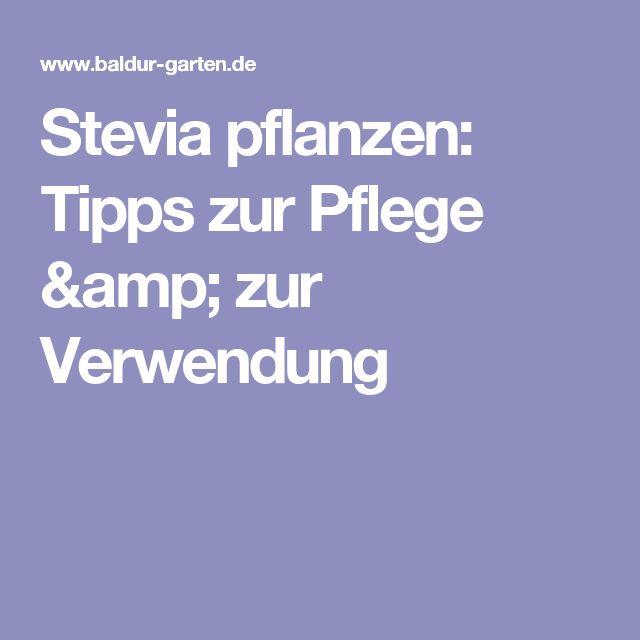 Stevia pflanzen: Tipps zur Pflege & zur Verwendung