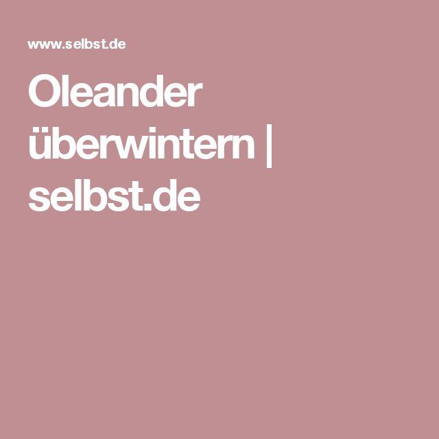 Oleander überwintern | selbst.de