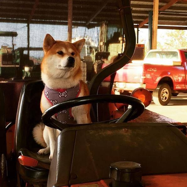 I'm going to be a Kubota tractor driver for the day   Pic by emicheape (IG)