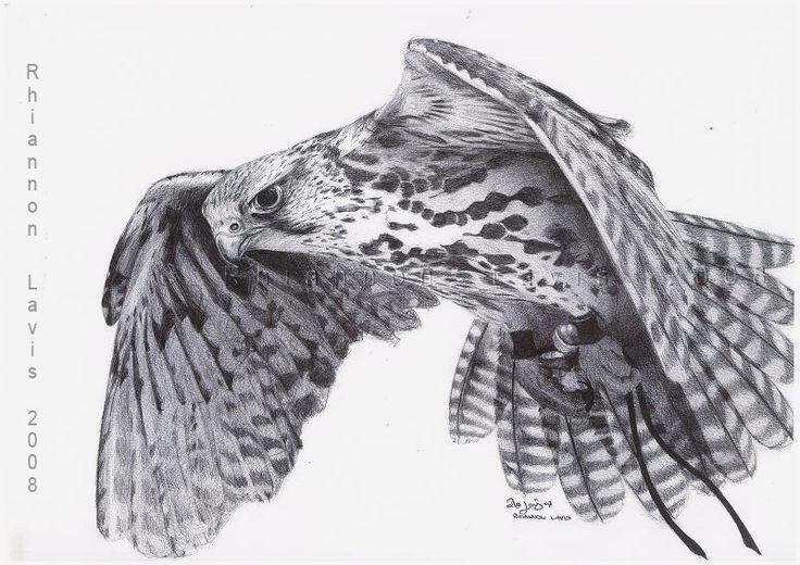 falcon tattoos   Falcon named Hope by oddballoffun on DeviantArt