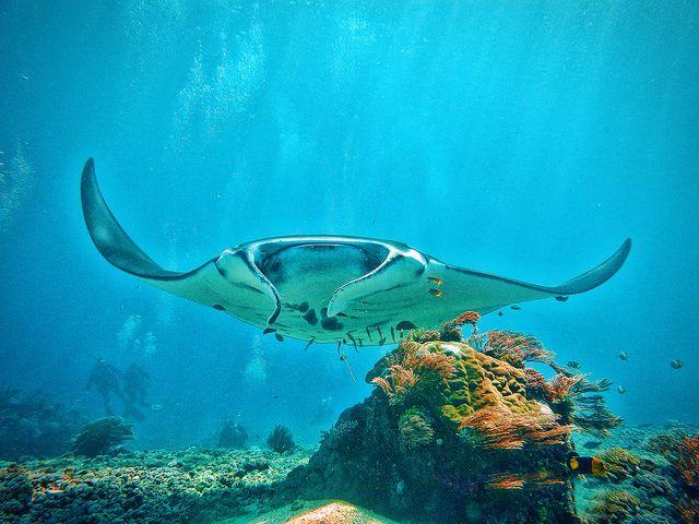 Amazing diving, Flores Indonesia