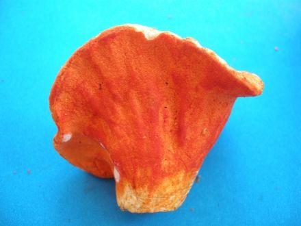 Carbonara aux champignons homard - MycoBoutique