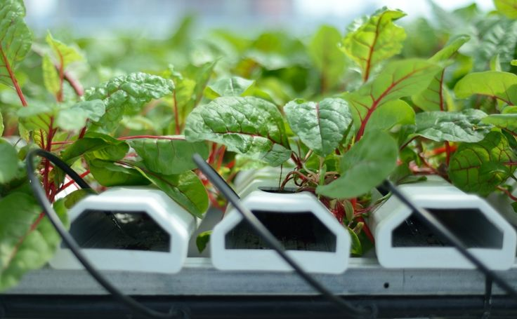 homemade small indoor nft hydroponics systems