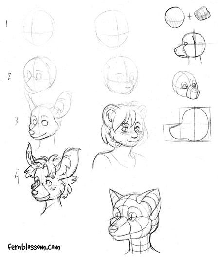 tutorial anthro head drawing step 1   Furry   Pinterest ...