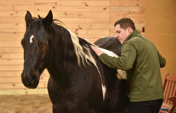 Veteran conquers post-traumatic stress with help from horses