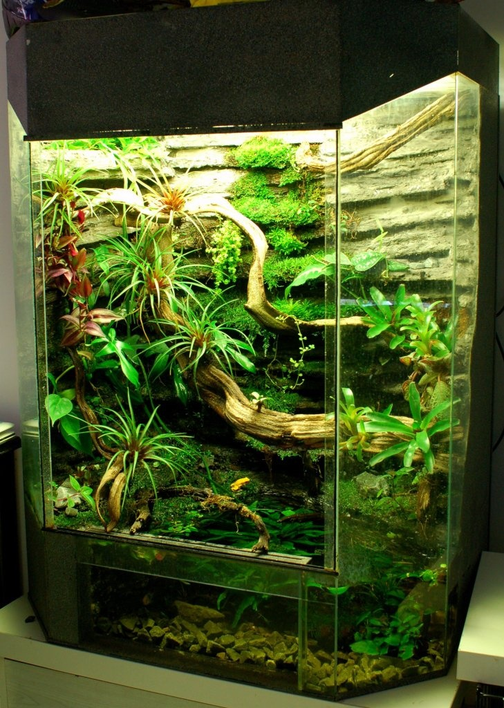 Great looking planted half water half land tank! I love tanks like this! Very low maintenance:) I would add a fogger to the top of this tank!