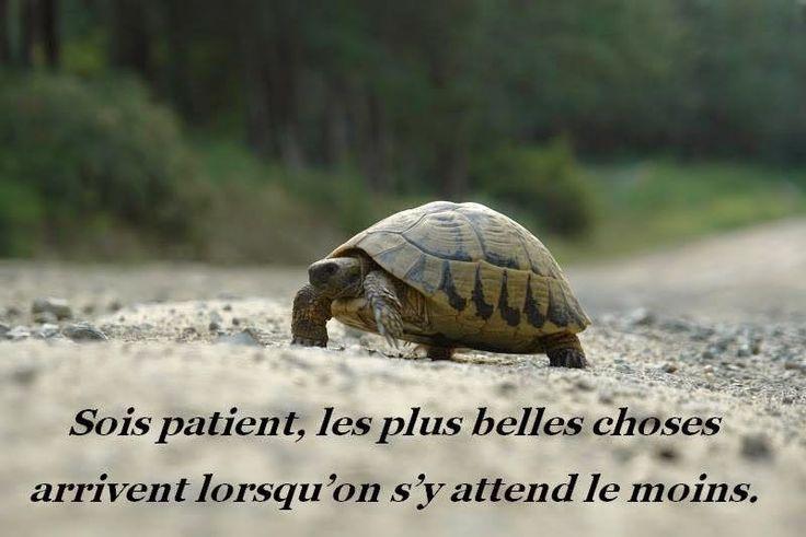 Pensées positives Améliore ton moral: Pensée positive sur la patience