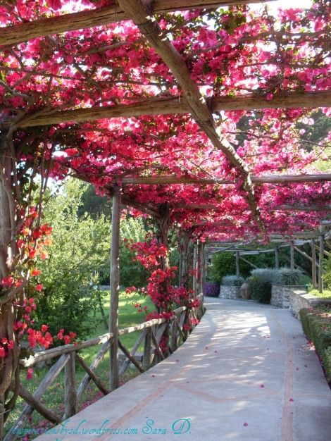 bougainvillea-not sure what these timbers are but nice alternative to recycled industrial look