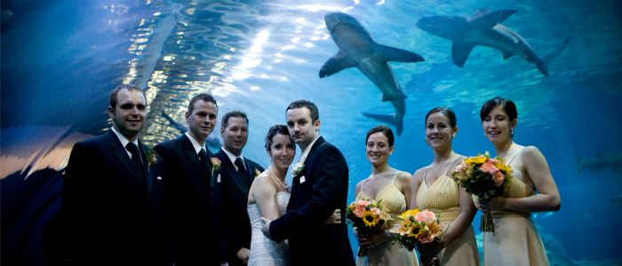What About A Wedding At Your Local Aquarium Unique