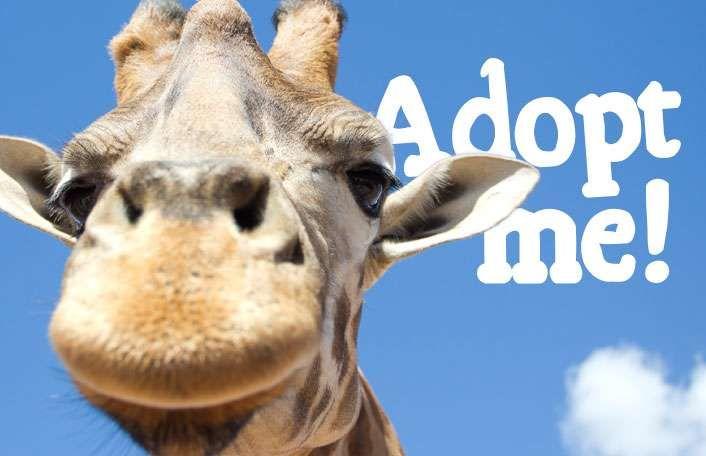 Giraffe Facts & Information - Monarto Zoo