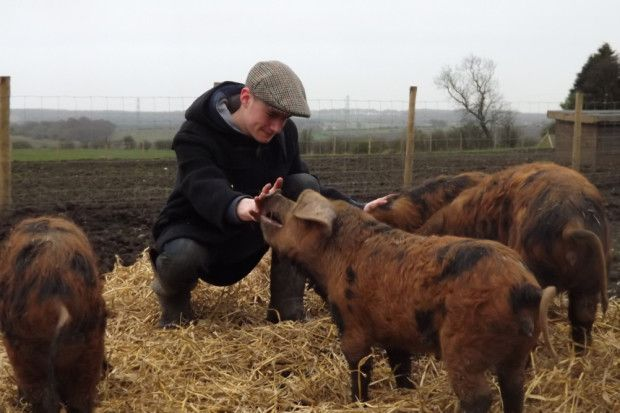 Young pig farmer Benjamin Wreford with some Oxford Sandy and Black pigs