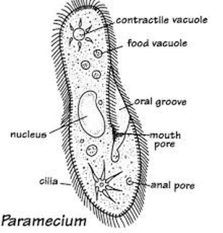 21 best kingdom protista images on pinterest